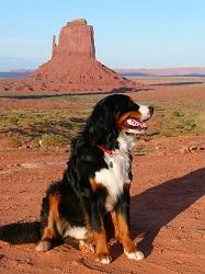 Hund in Amerika