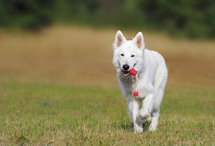 Bild eines spielenden Hundes