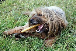 Hundefutter im Urlaub