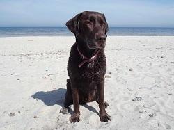 Hund an der Ostsee