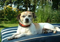 Bild des Hundehotels Hundehotel Birgitts