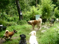 Bild des Hundehotels Dog Camp