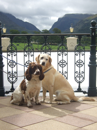 Bild des Hundehotels The Dunloe
