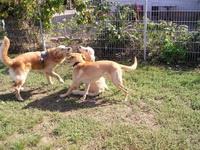 Bild des Hundehotels Tierbetreuung Lampertheim