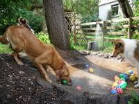 Bild des Hundehotels Hundeferien Odenwald