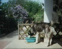 Bild des Hundehotels Hundepension Seiler