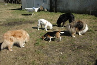 Bild des Hundehotels Hundepension Soltau