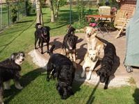 Bild des Hundehotels Hundehotel Struvenhütten